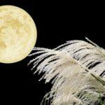 お月見はなにをするの? いつやればいいの? 詳しく調べてみました。