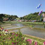 千葉県香取市の橘ふれあい公園で鯉のぼりまつり!普段は無料でキャンプもできるよ。